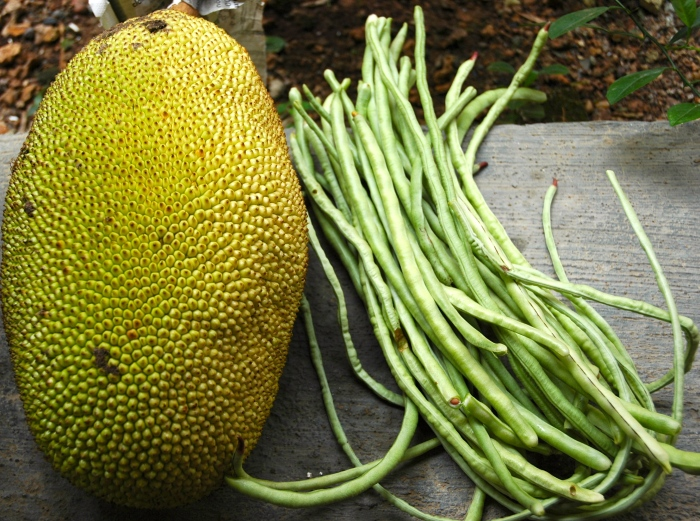 Jack fruit & long beans