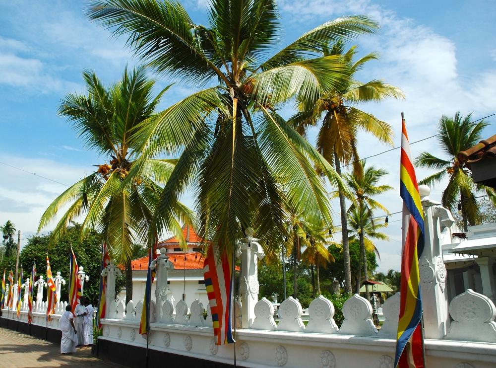 Three Months In Sri Lanka - Week 2 (1/6)