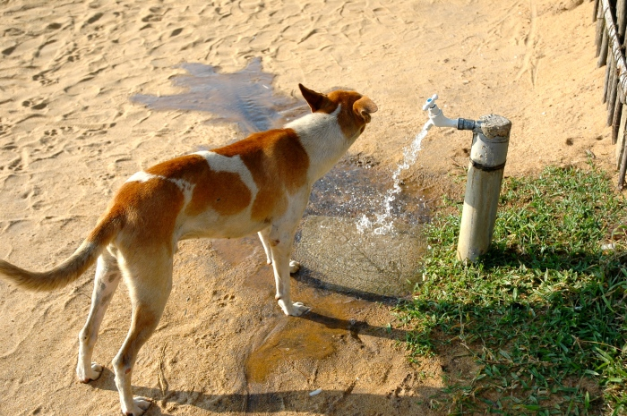 Dog Thirsty!