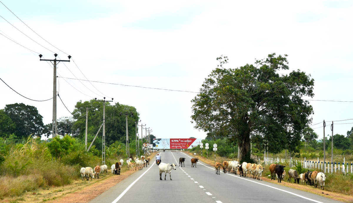 Road To Jaffna - 2018